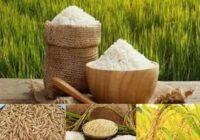 برنج یک گام تا بورسی شدن/۱۰۰۰ تن برنج مرحله اول عرضه می شود