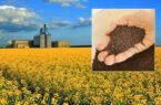 ۳ پیشنهاد برای افزایش ضریب خوداتکایی دانههای روغنی