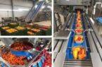 راه اندازی طرح سورتینگ وسردخانه میوه،صیفی جات و مواد پروتئینی